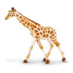 Žirafa africká mláďa