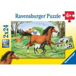 Svet koní 2x24p