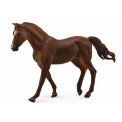 chestnut žrebec